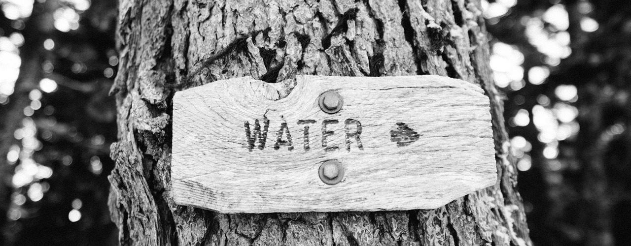 napis water na drzewie